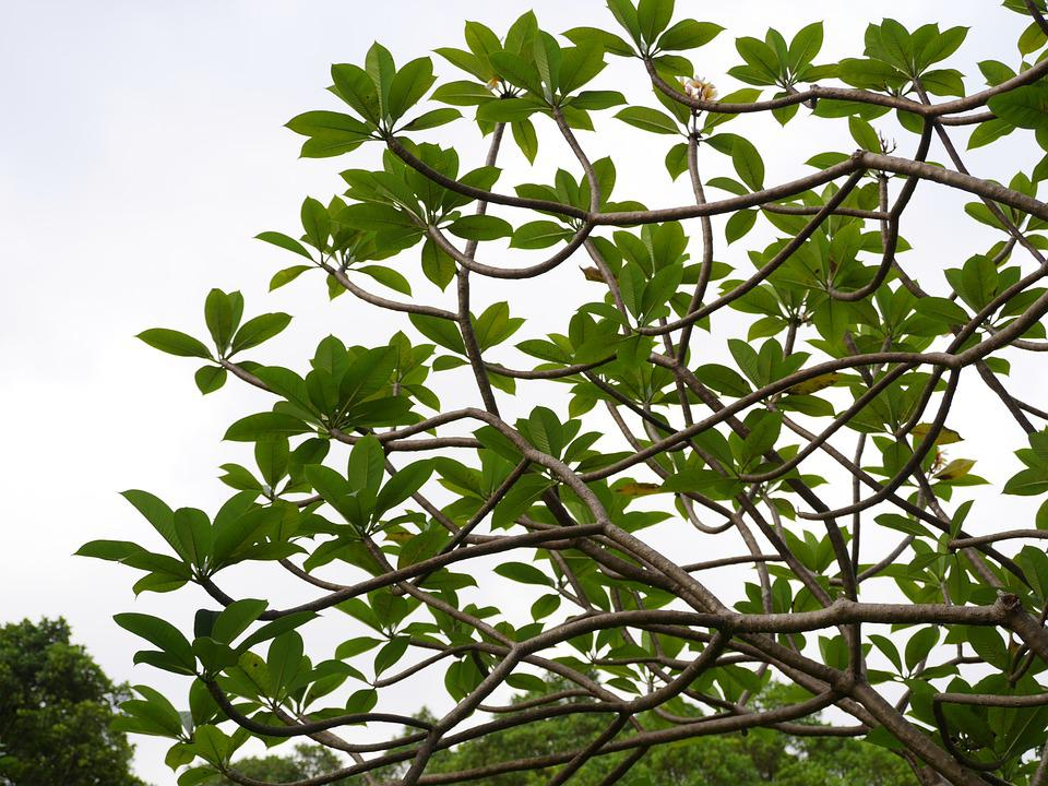 Tree, Leaves, Green, Forest, Foliage, Branch, Nature