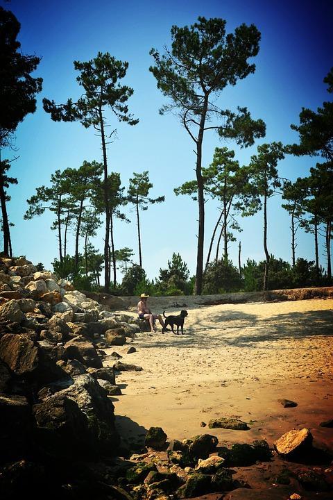 Beach, Oléron, Nature, Tree, Sand, Leaves, Landscape