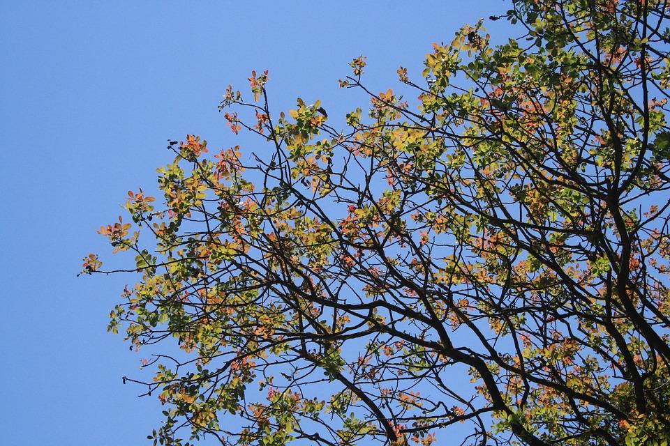 Tree, Foliage, Leaves, Multicolor, Light, Summer