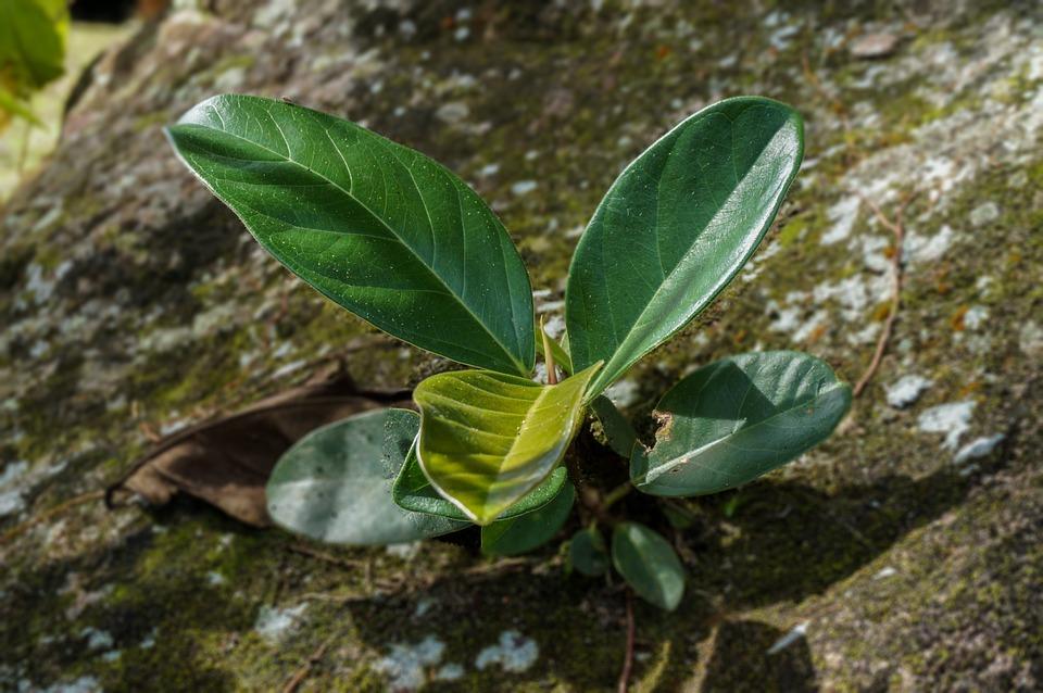 Nature, Flora, Floral, Plant, Tree, Leaves, Flower