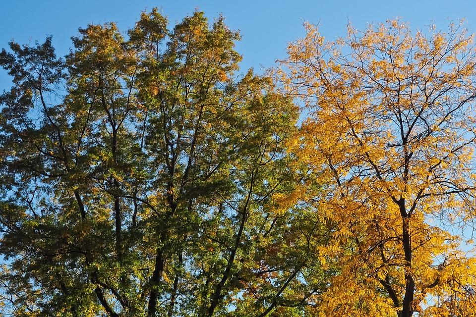 Trees, Autumn, Nature, Landscape, Leaves, Mood, Bright