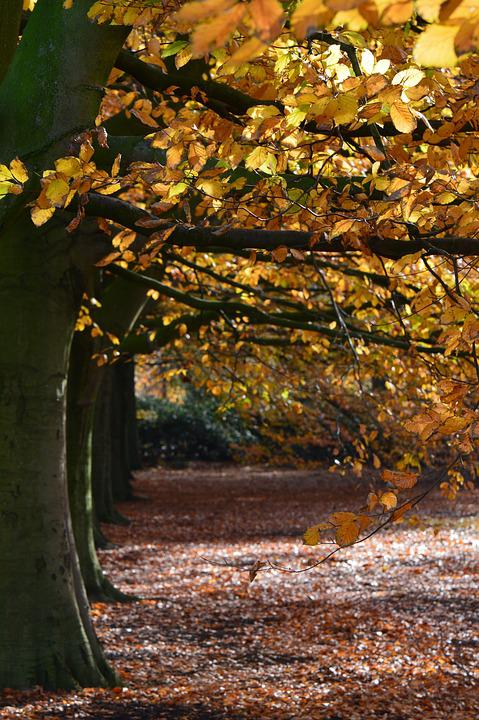 Forest, Autumn, Landscape, Trees, Vote, Leaves, Light