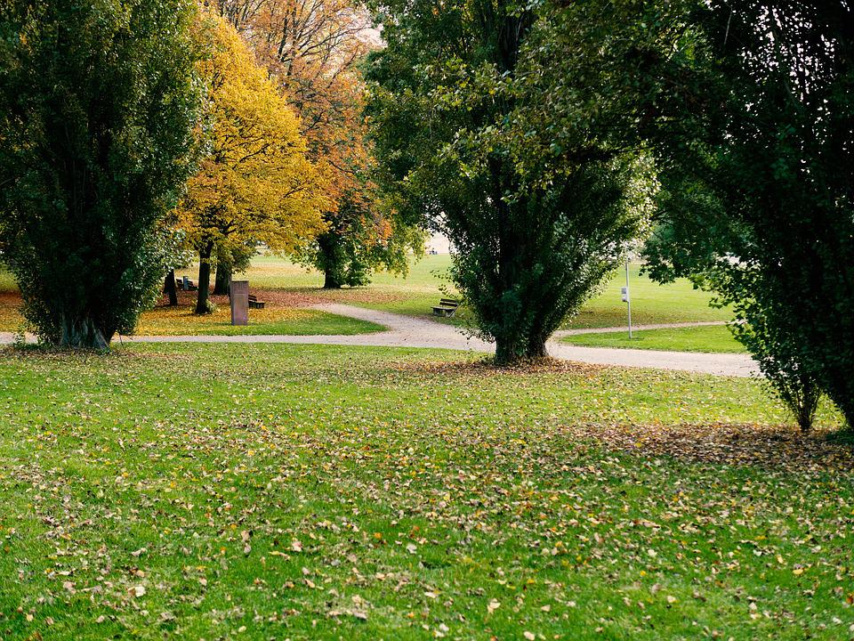 Park, Recovery, Walk, Leaves, Rhine Promenade, Trees