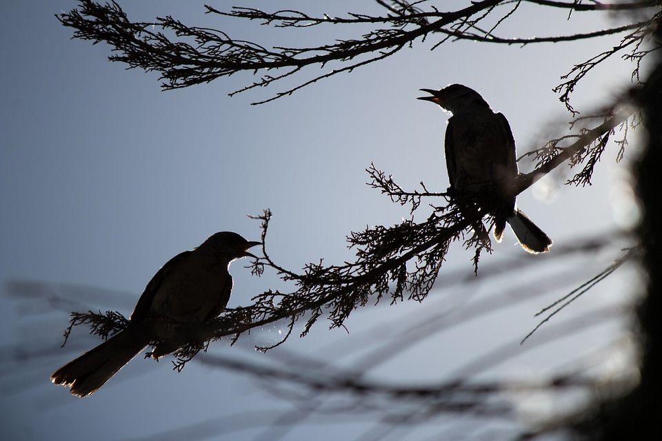 Bird, Branch, Wildlife, Trees, Leaves, Silhouette