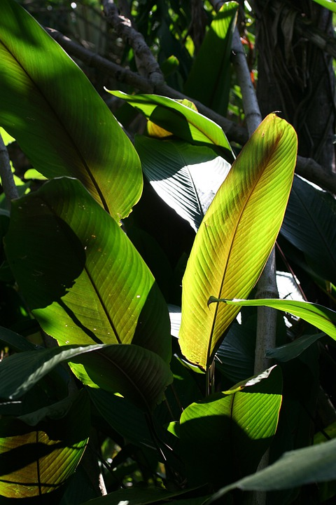 Costa Rica, Leaves, Rain Forest, Tropical, Plant