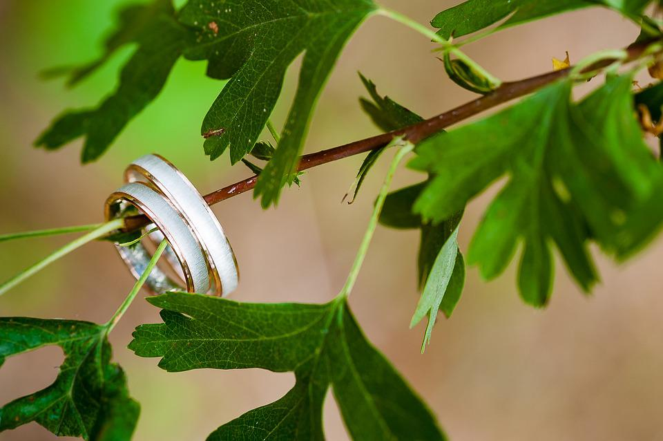 Wedding, Rings, Tree, Leaves, Jewellery, Wedding Rings
