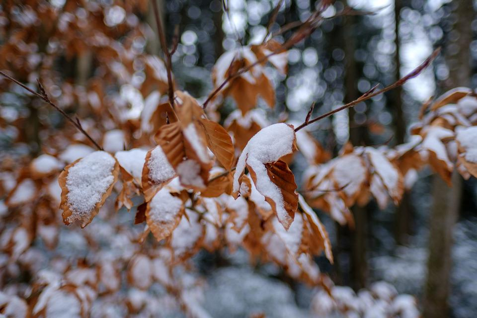 Winter, Snow, Leaves, Autumn, Cold, Frost, Forest