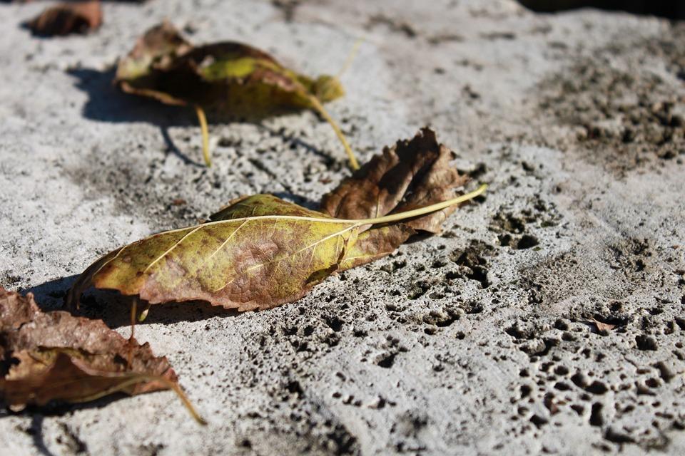 Leaves, Rock, Stone, Travertine, Yellow, Autumn