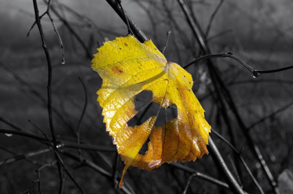 Autumn, Leaf, Yellow, Nature, Tree, Dead Leaf, Leaves