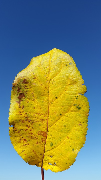 Leaf, Yellow, Summer, Sun, Deciduous Tree, Grow, Leaves