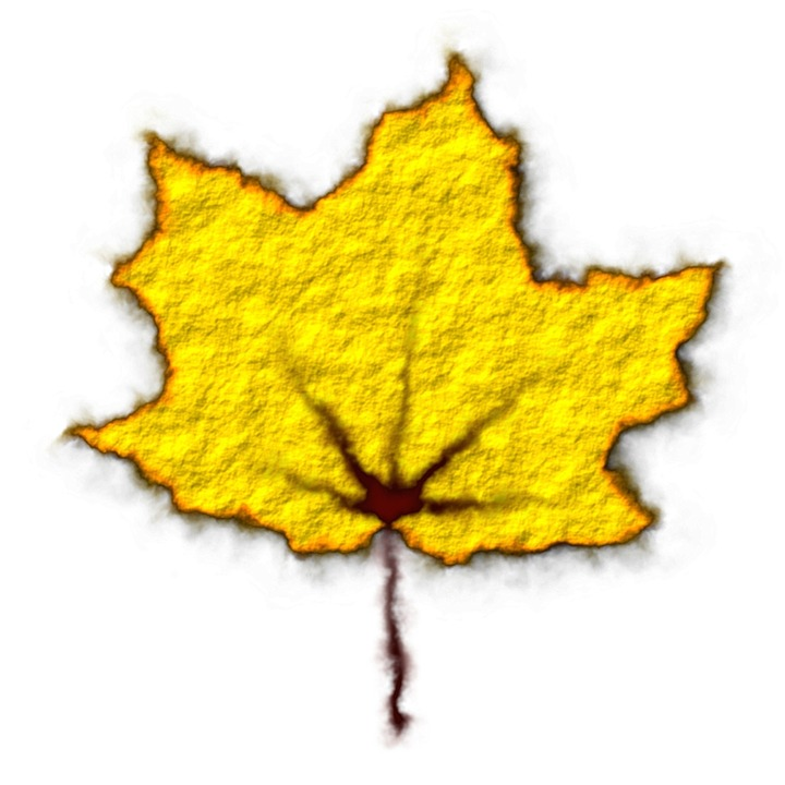 Yellow Leaf, Fall, Autumn, Leaves, Fall Leaves
