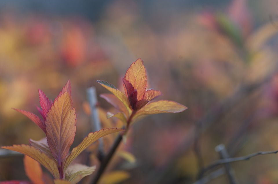Leaves, Red, Nature, Color, Colorful, Yellow, Orange