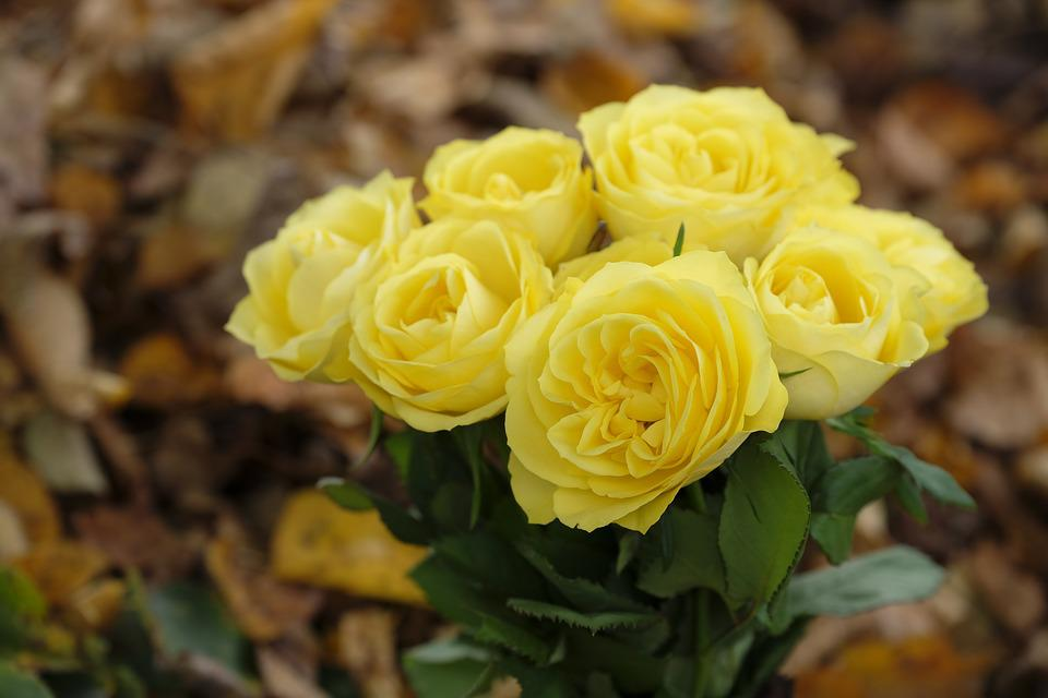 Roses, Flowers, Bouquet, Autumn, Leaves, Yellow