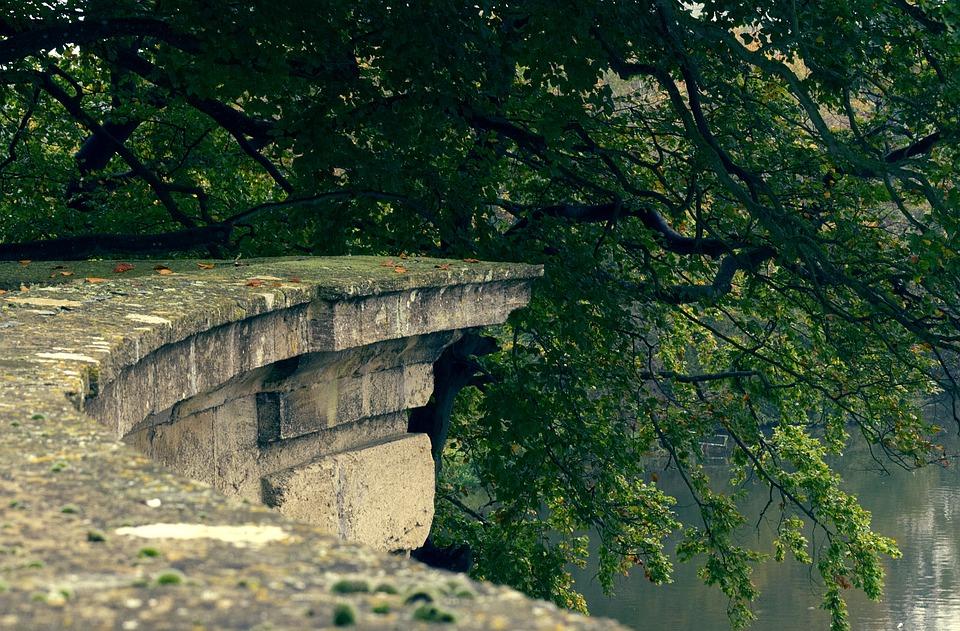 Ledge, Garden, Wall, Lake, Tree, Greenery, Leaves