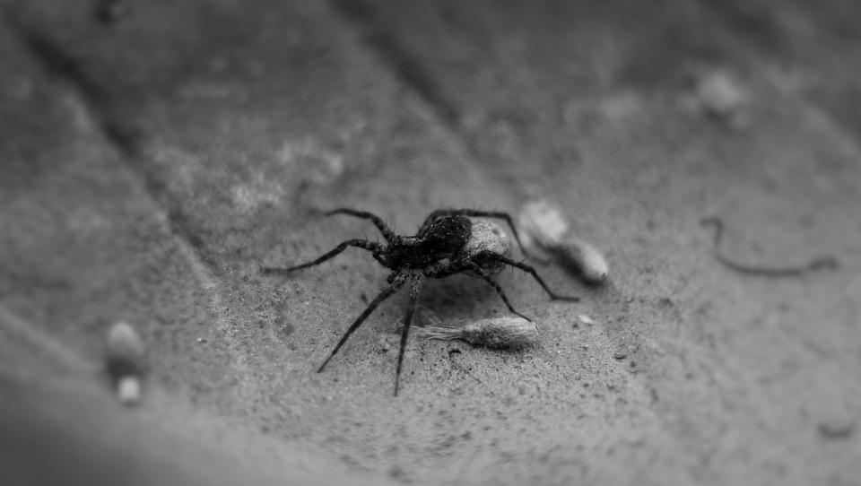 Spider, Legs, Black, Small, Nasty, Shell, Summer