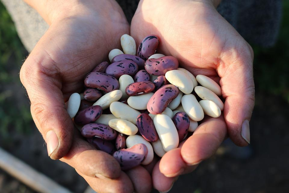 Runner Beans, Food, People, Daytime, Many, Bean, Legume