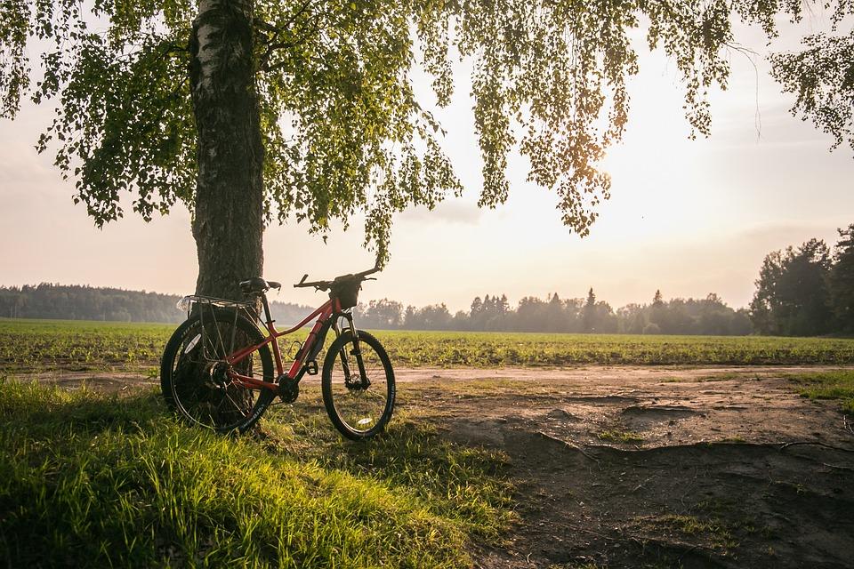 Bike, Summer, Nature, Leisure, Sports, Travel, Road