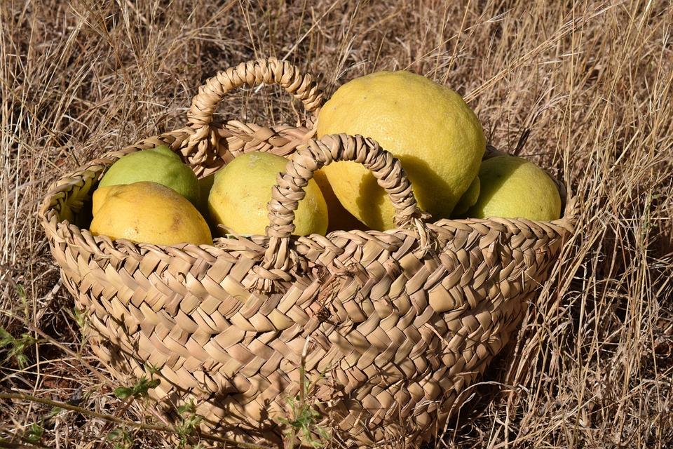 Lemons, Lemon Basket, Fruit Basket, Harvest
