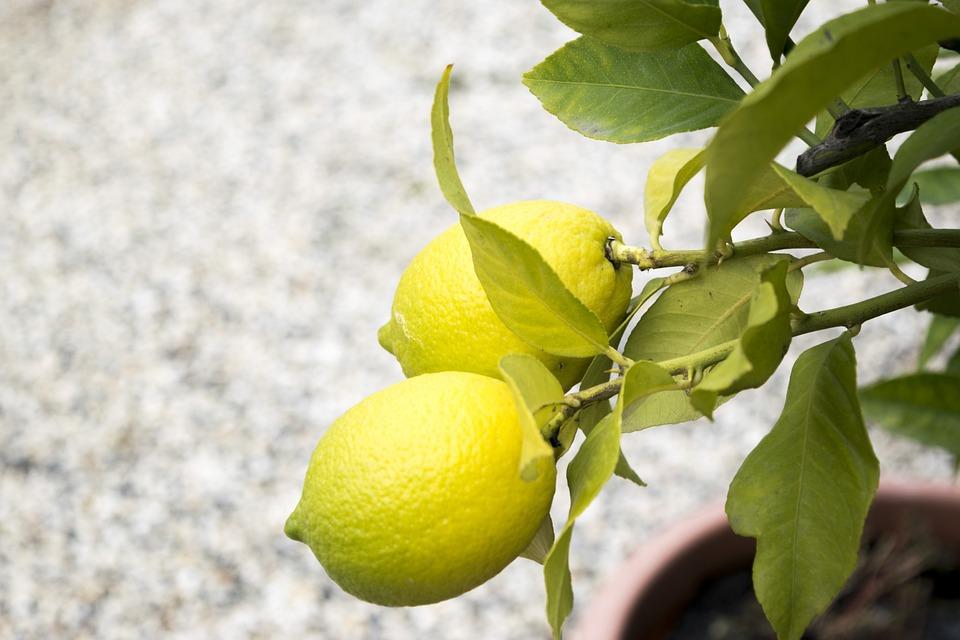 Lemons, Nature, Sano, Cool, Fruit, Lemon, Citrus Fruits