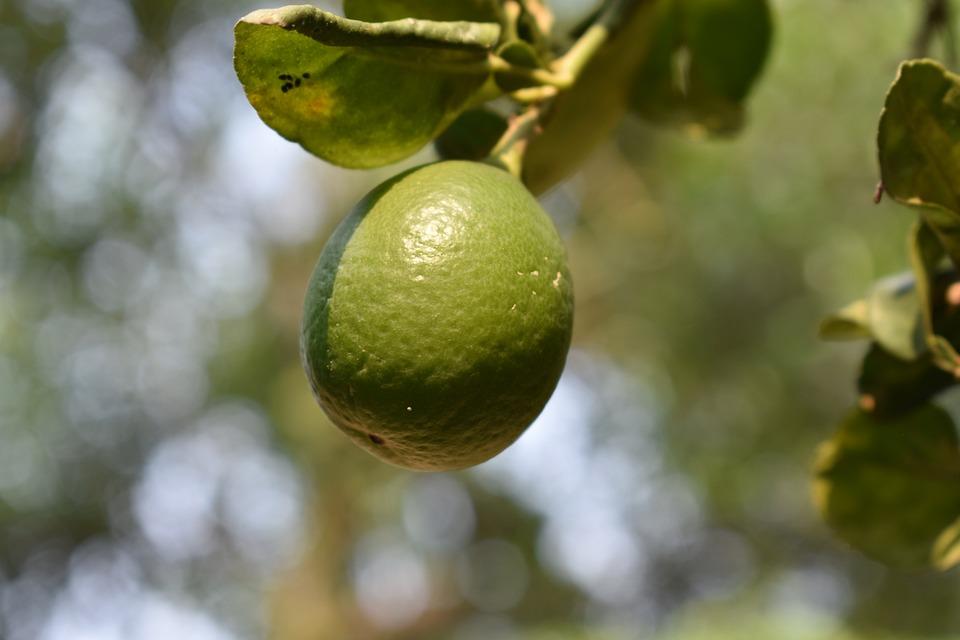 Lemon, Fruit, Vitamin, Food, Healthy, Lemons, Green