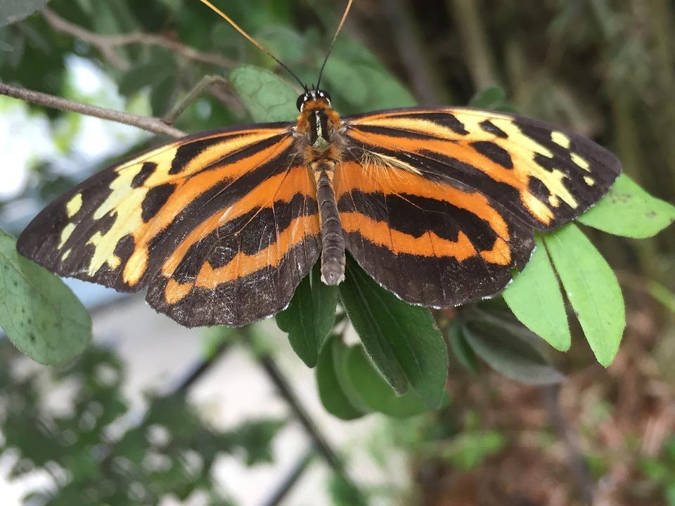 Butterfly, Leopard Print, Leopard, Orange, Gold