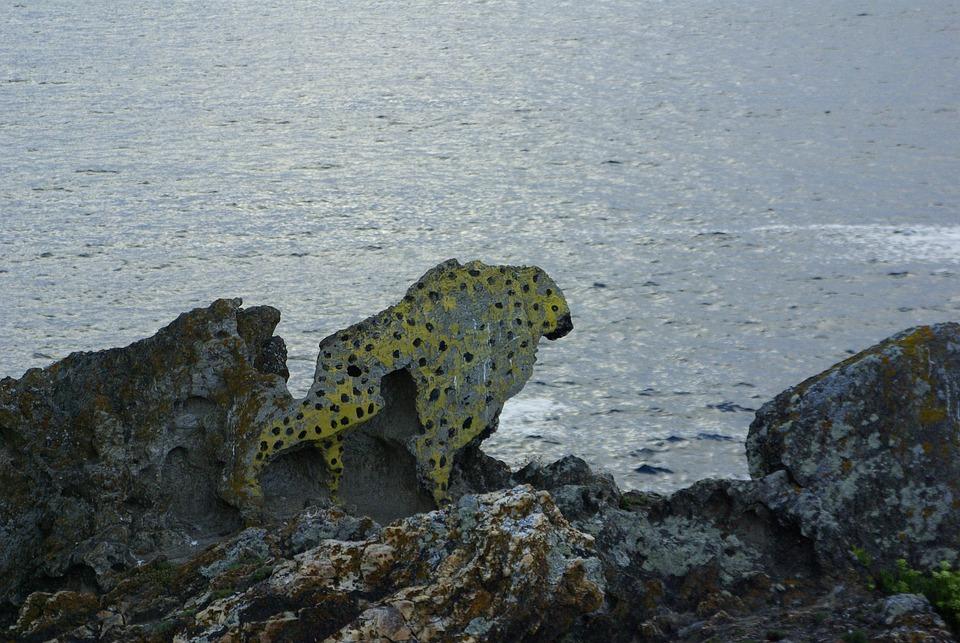 Leopard, Galicia, Sea