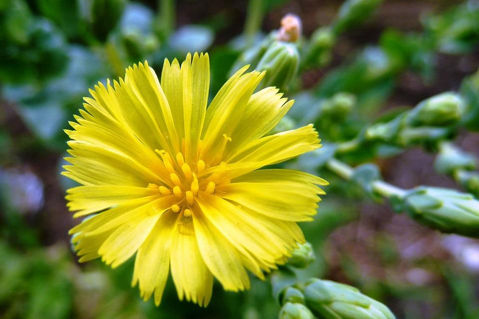 Butter, Lettuce, Fresh, Flower, Garden, Nature, Health