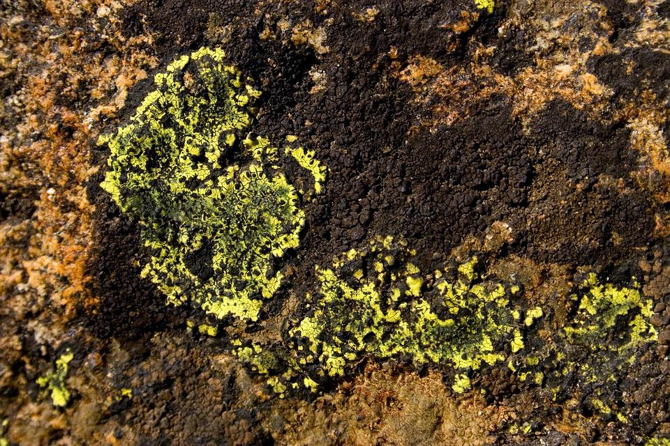 Lichen, Detail, Macro, Nature, Rock
