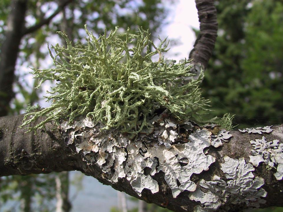 Moss, Lichen, Tree, Nature, Forest, Texture, Flora