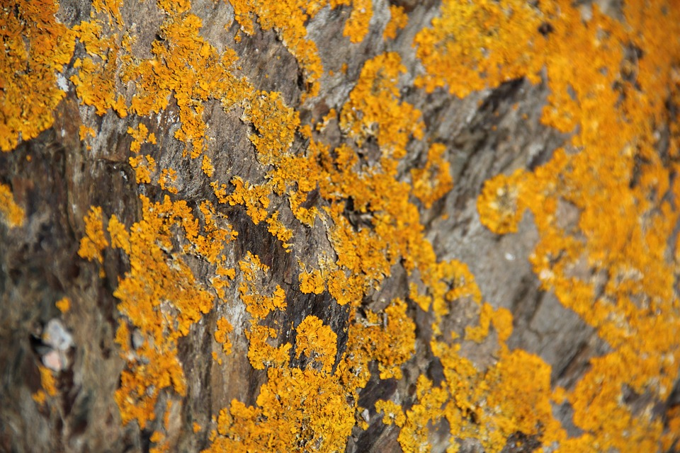 Foam, Lichen, Yellow, Nature, Pierre