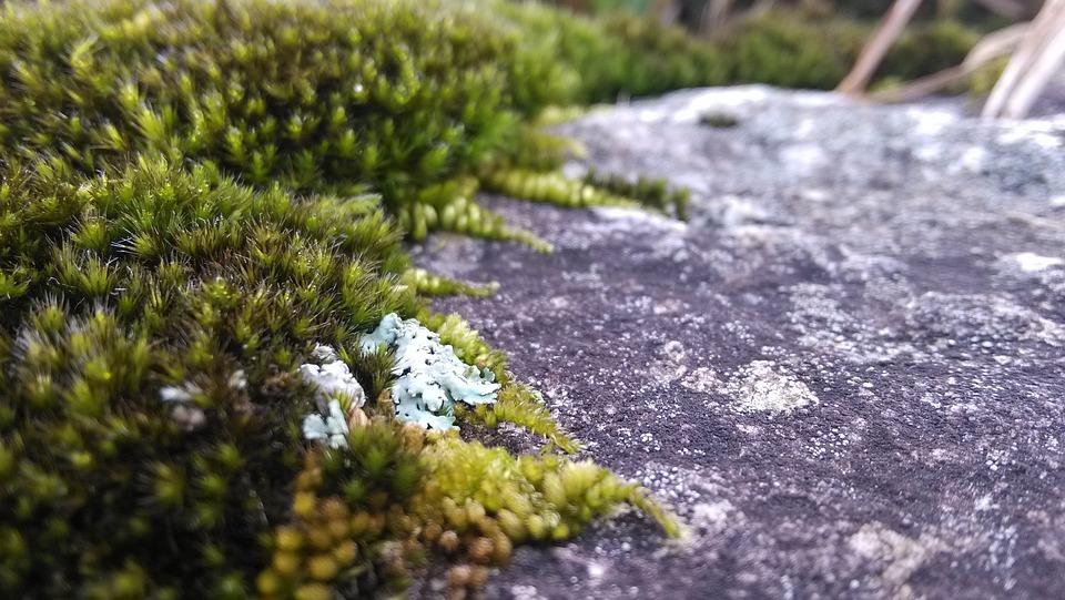 Moss, Lichens, Rock