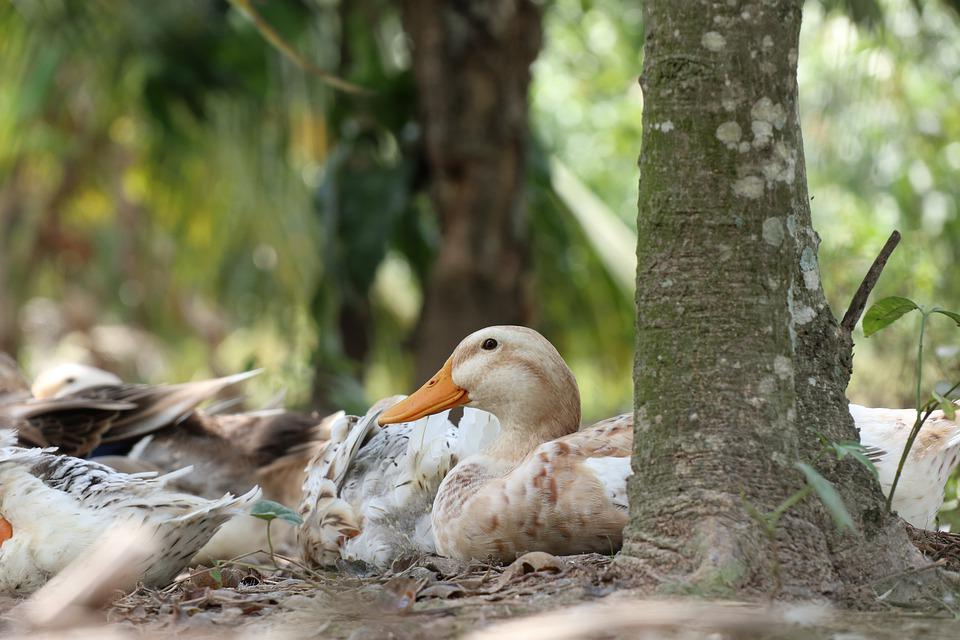 One Duck Monitoring, Relaxation, Rest, Lie, Tree