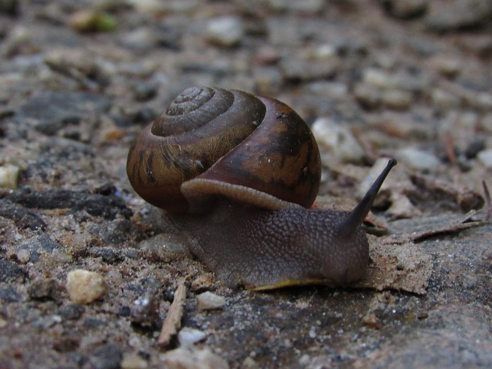 Snail, Earth, Nature, Shell, Natural, Animal, Life