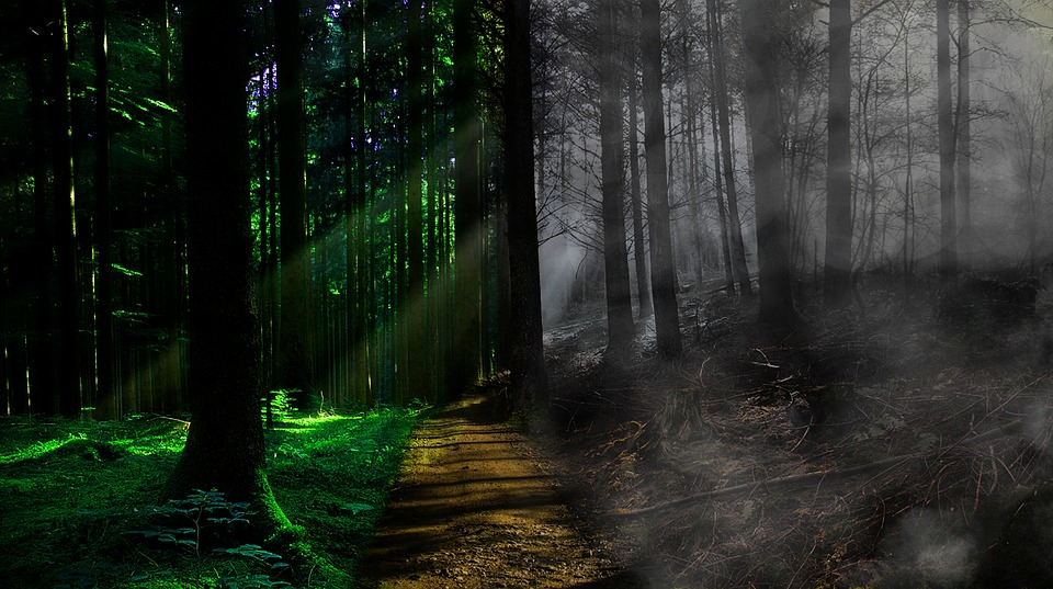 Death, Life, Fog, Forest, Path, Trees