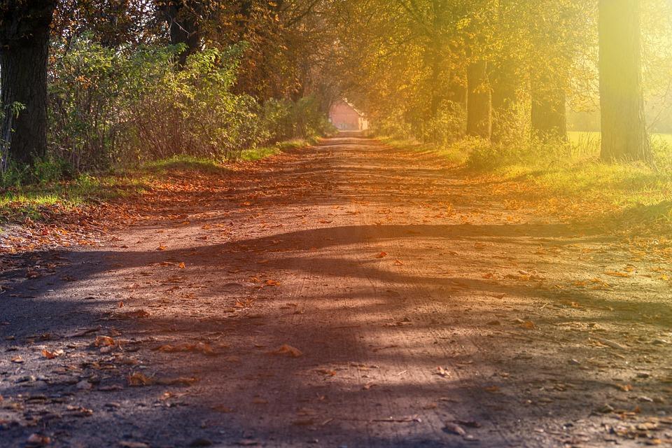 The Sun, Way, Autumn, Landscape, Road, Light, Tree