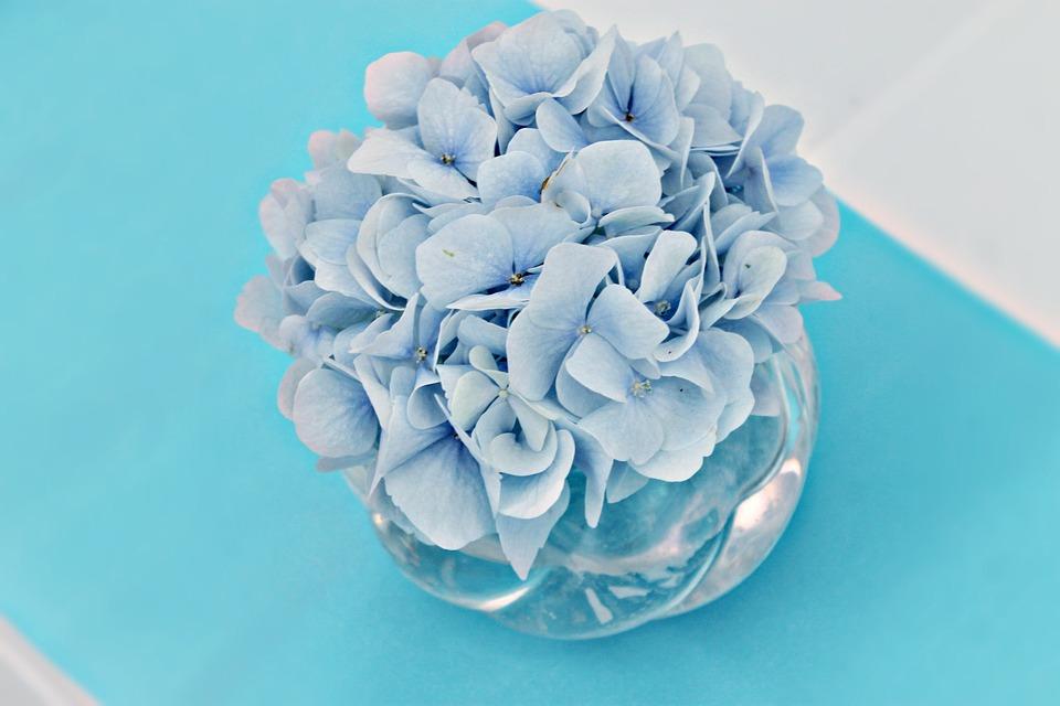 Flower, Hydrangea, Table Decoration, Plant, Light Blue