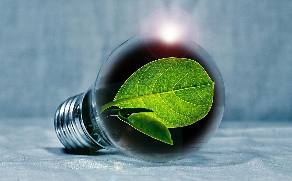 Light Bulb, Leaf, Chlorophyll, Green, Leaf Green, Light