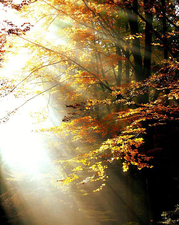 Forest, Light, Autumn, Trees, Leaves, Color, Sunbeam