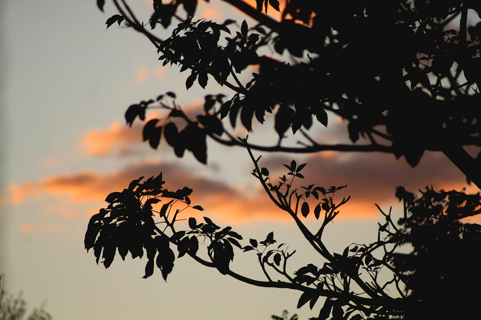 Branch, Dawn, Dusk, Evening, Leaves, Light, Outdoors