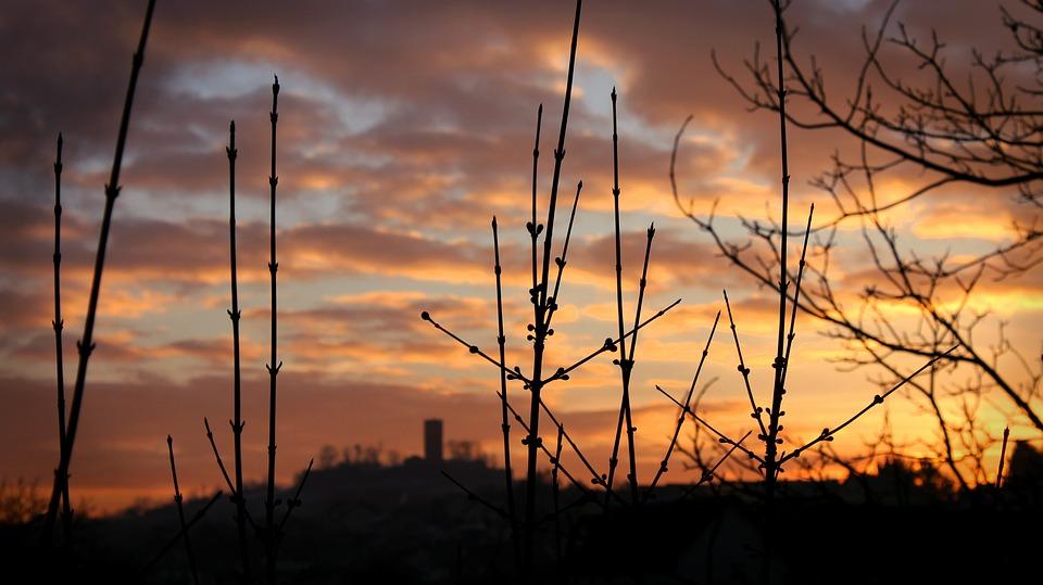 Sunset Sky Aesthetic Trees Evening Mood Light