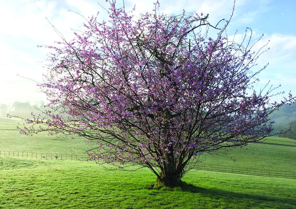 Spring, Flower, Tree, Sun, Morning, Nature, Sky, Light