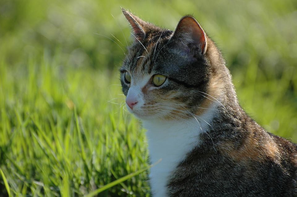 Cat, Garden, Nature, Green, Close-up, Light