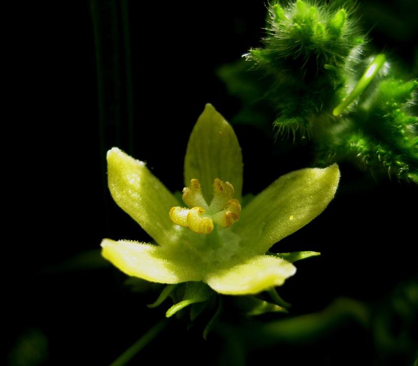 Flower, Bloom, Open, Delicate, Intricate, Light