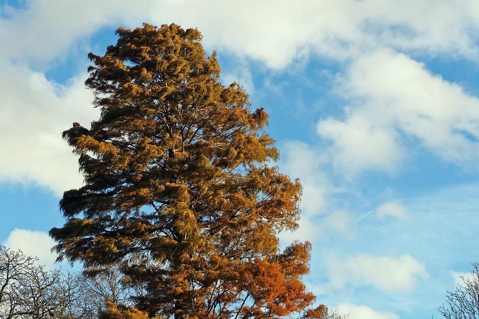 Tree, Autumn, Golden Autumn, Nature, Leaves, Light, Red