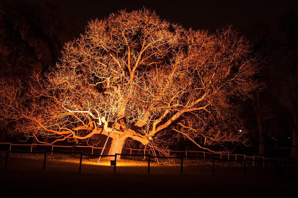 Tree, Light, Lighting, Atmospheric, Mystical