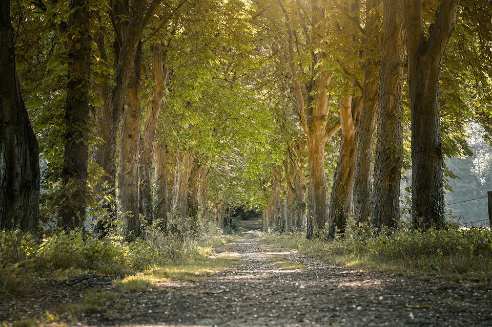 Avenue, Trees, Forest Path, Walk, Sun, Light, Mood
