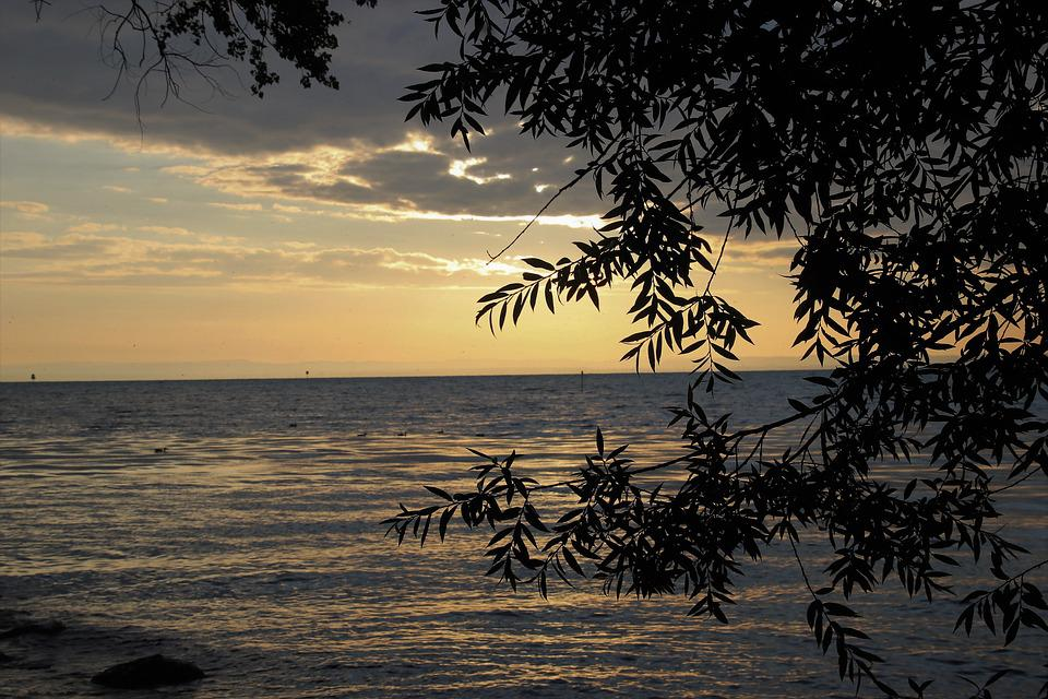 Morning, Lake, Light, East, Dawn, Branches, The Waves