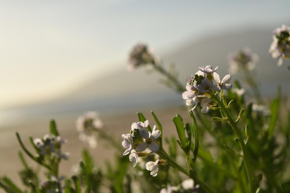 Flower, Morning, Summer, Flowers, Nature, Light