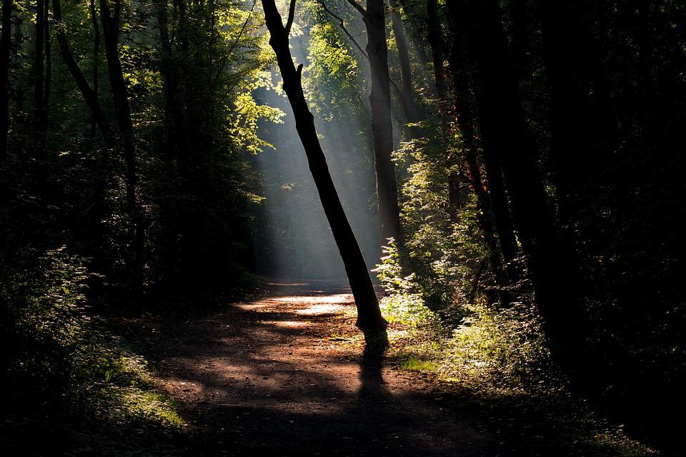 Forest, Away, Hiking, Nature, Autumn, Light, Trail