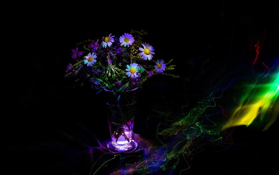 Light Painting, Flowers, Art, Neon, Freezelight